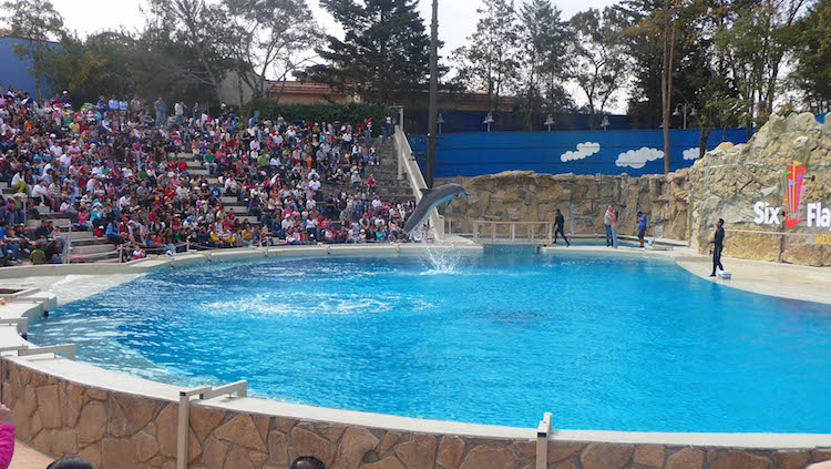 Six Flags will have to shut down their dolphin show in Mexico City after a bill was passed banning captive dolphins.